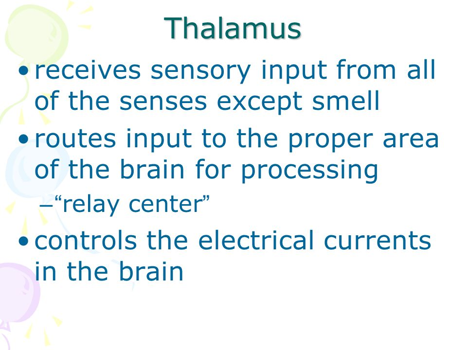 Thalamus receives sensory input from all of the senses except smell
