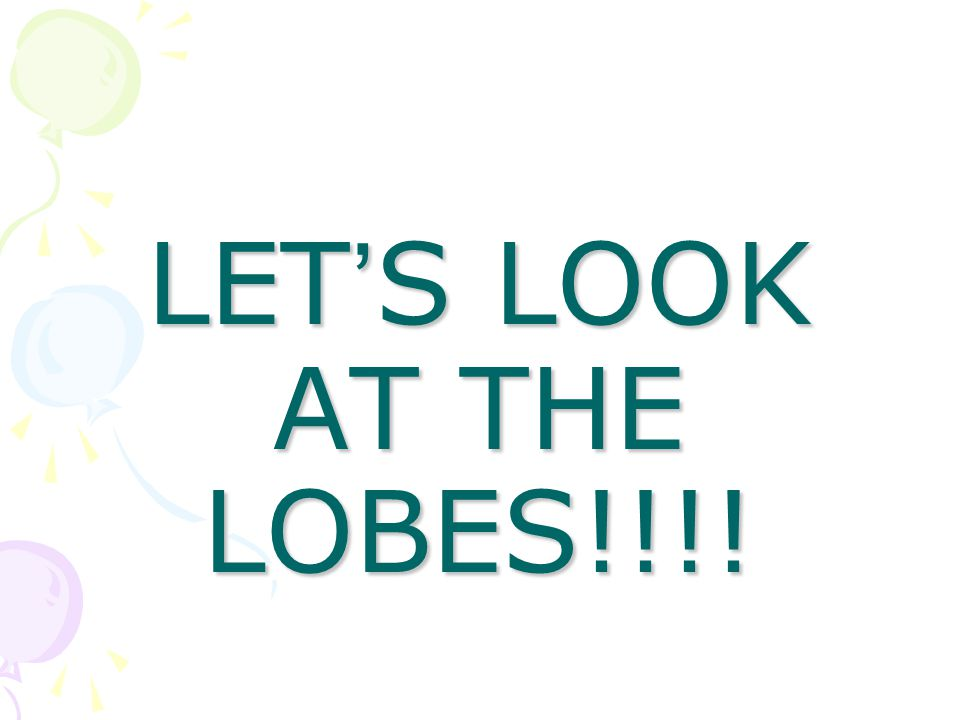LET'S LOOK AT THE LOBES!!!!