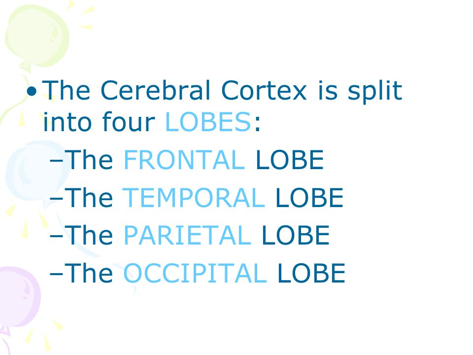 The Cerebral Cortex is split into four LOBES: