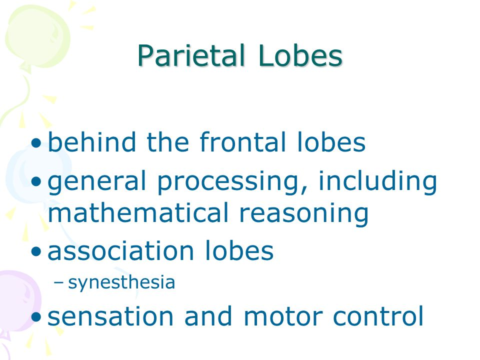 Parietal Lobes behind the frontal lobes