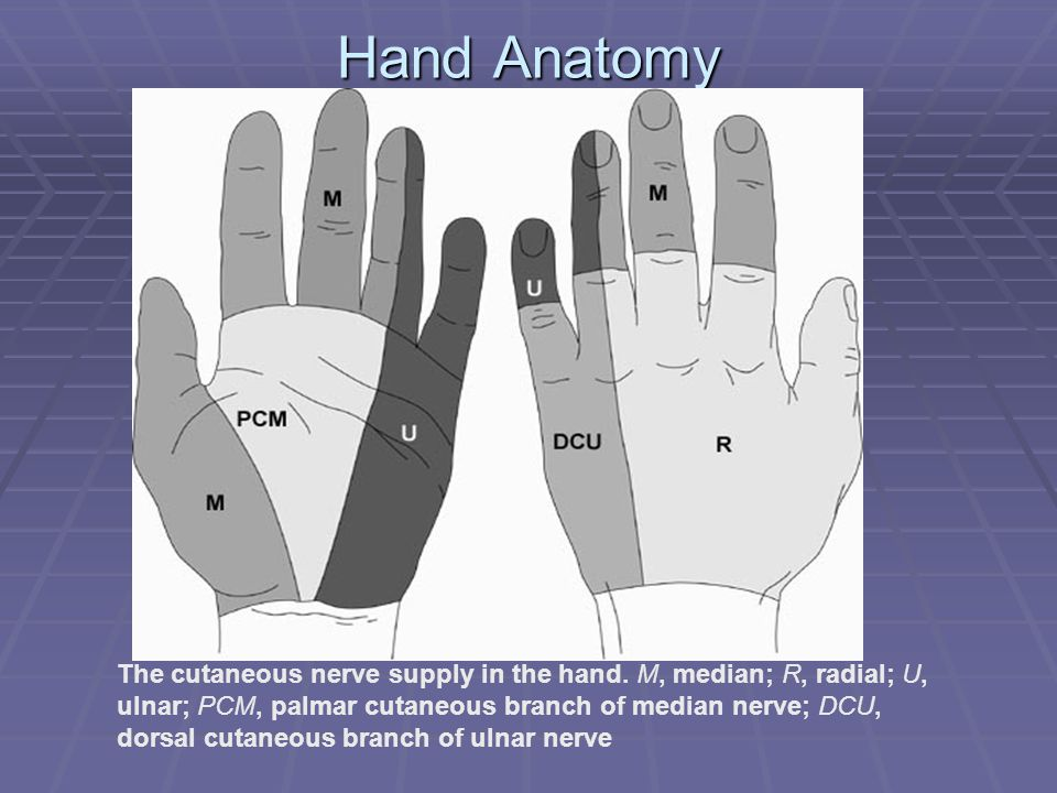 Injuries To The Hand And Digits - ppt download
