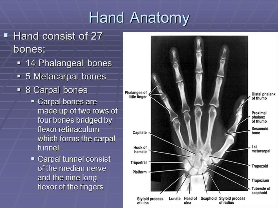 Injuries To The Hand And Digits Ppt Download