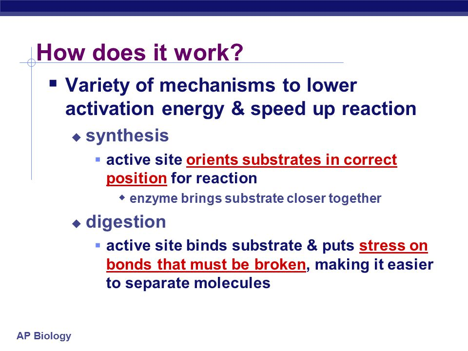 How does it work Variety of mechanisms to lower activation energy & speed up reaction. synthesis.