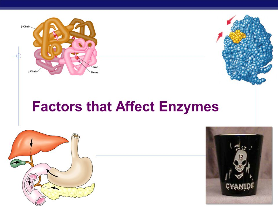 Factors that Affect Enzymes