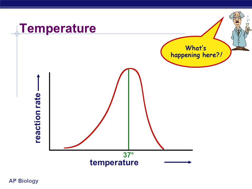 Temperature What's happening here ! 37° reaction rate temperature