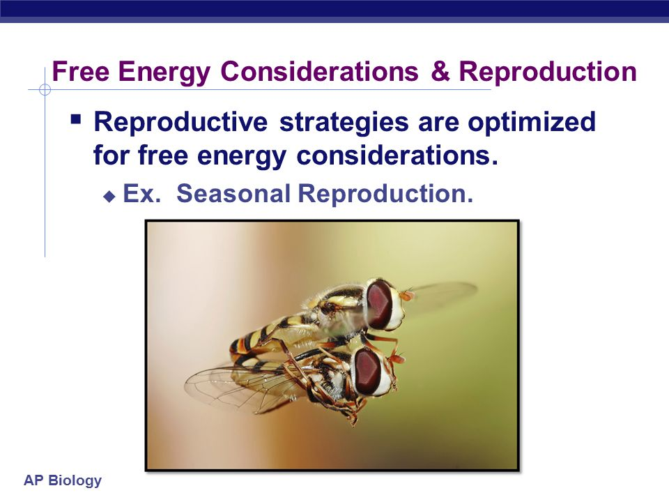 Free Energy Considerations & Reproduction