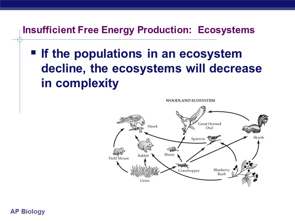 Insufficient Free Energy Production: Ecosystems