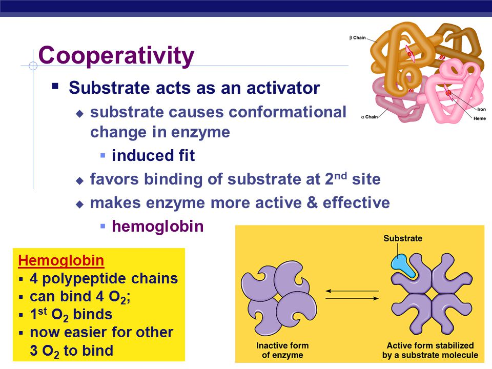 Cooperativity Substrate acts as an activator