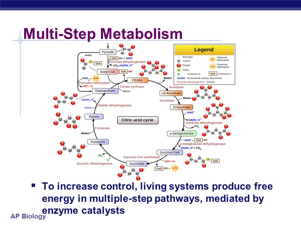 Multi-Step Metabolism