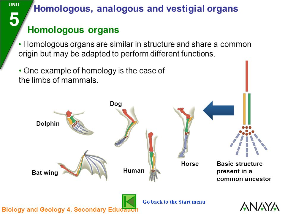 Homologous And Analogous Structures Examples Choice Image Example