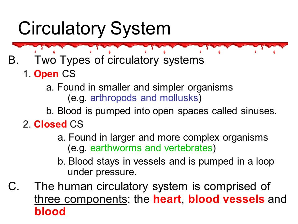 Circulatory System Overview Functions Of The Circulatory System Cs