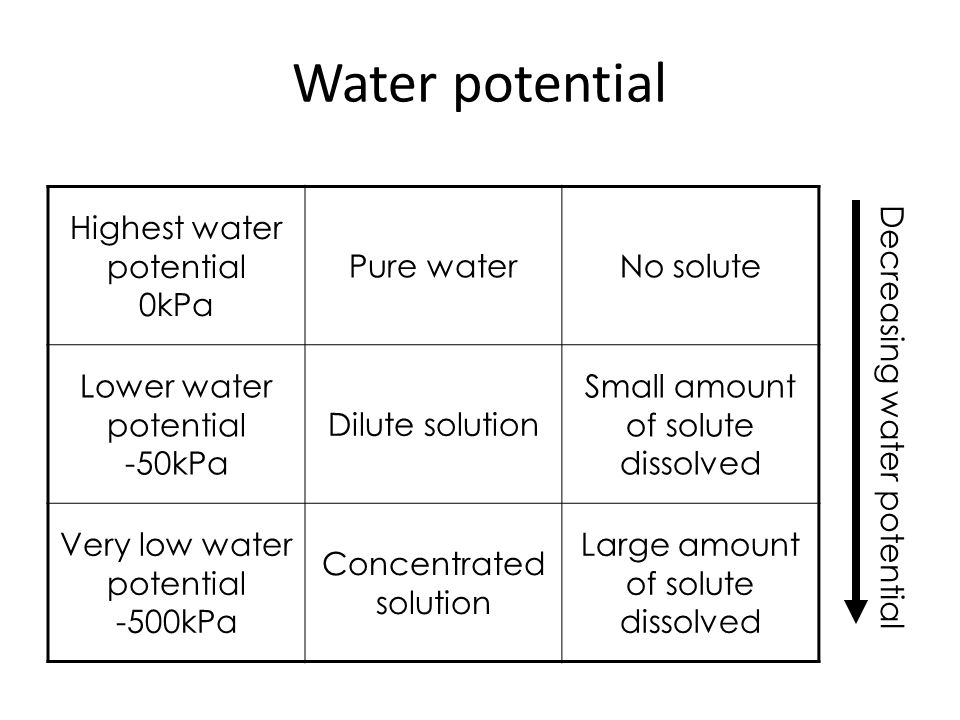 Water potential Highest water potential 0kPa Pure water No solute