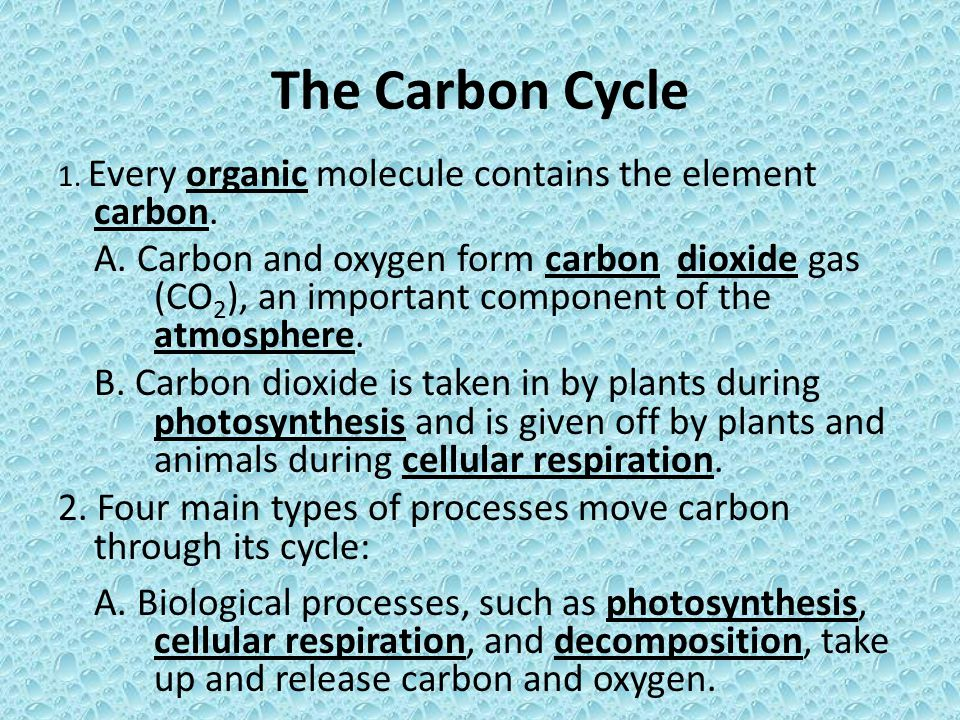 The Carbon Cycle 1. Every organic molecule contains the element carbon.