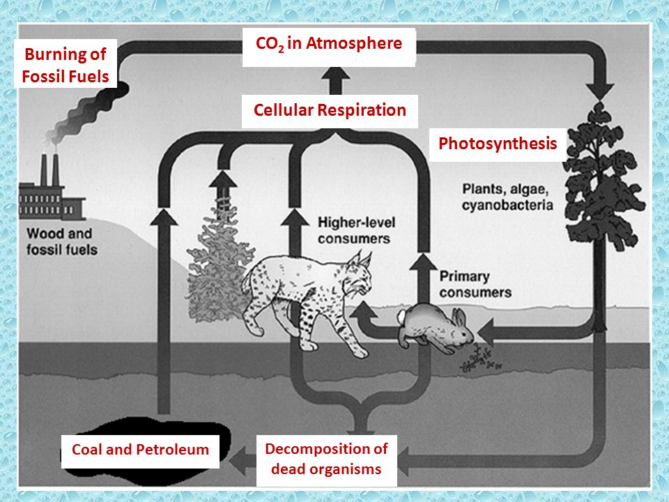 Burning of Fossil Fuels Decomposition of dead organisms