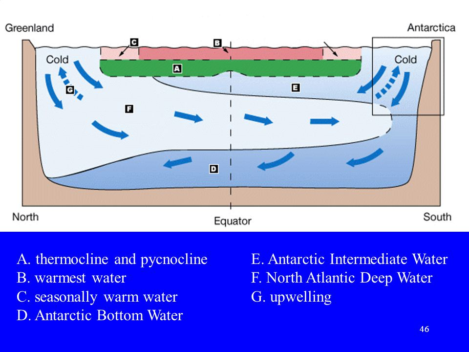 A. thermocline and pycnocline