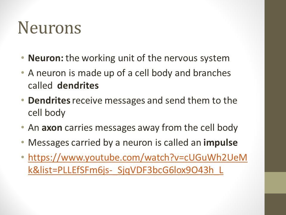 Neurons Neuron: the working unit of the nervous system