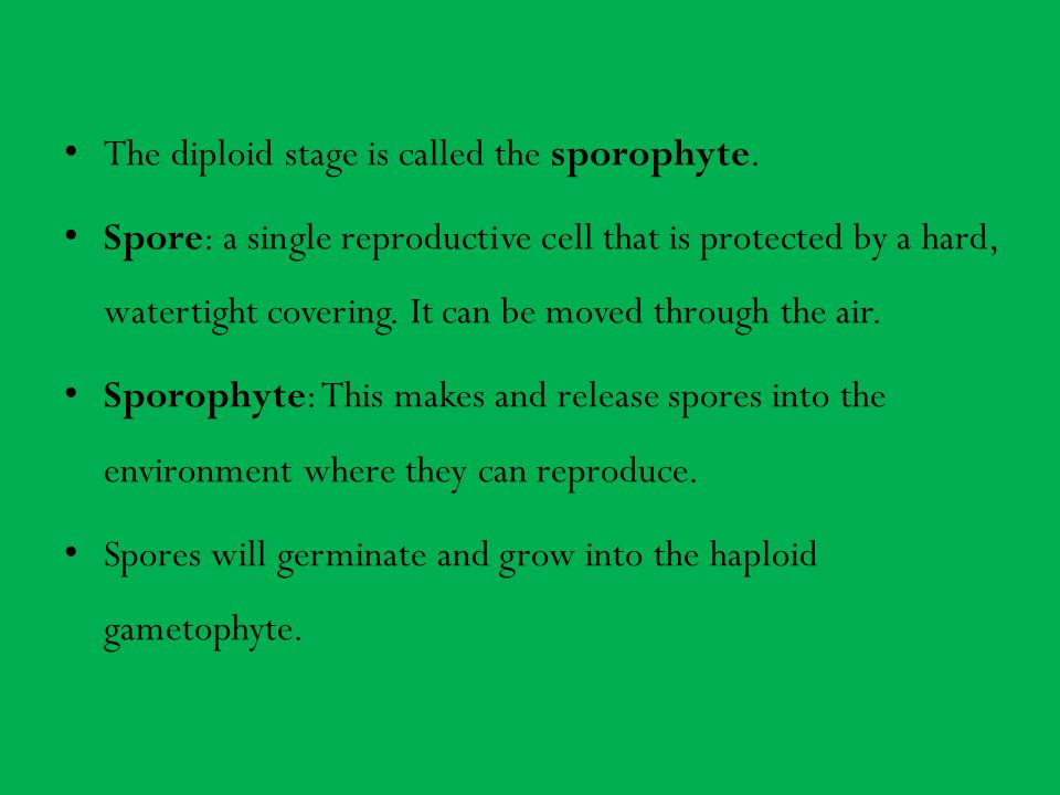 The diploid stage is called the sporophyte.