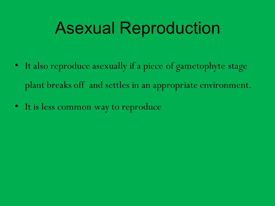 Asexual Reproduction It also reproduce asexually if a piece of gametophyte stage plant breaks off and settles in an appropriate environment.