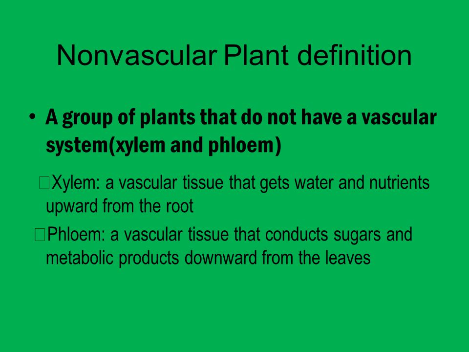 Nonvascular Plant definition