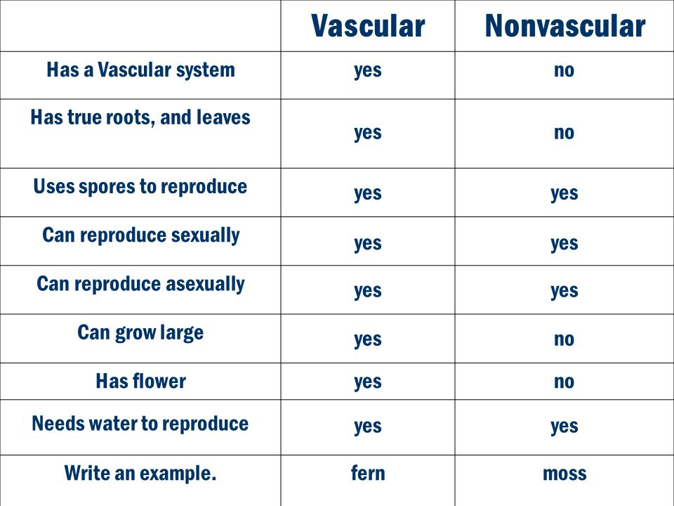 Vascular Nonvascular Has a Vascular system yes no