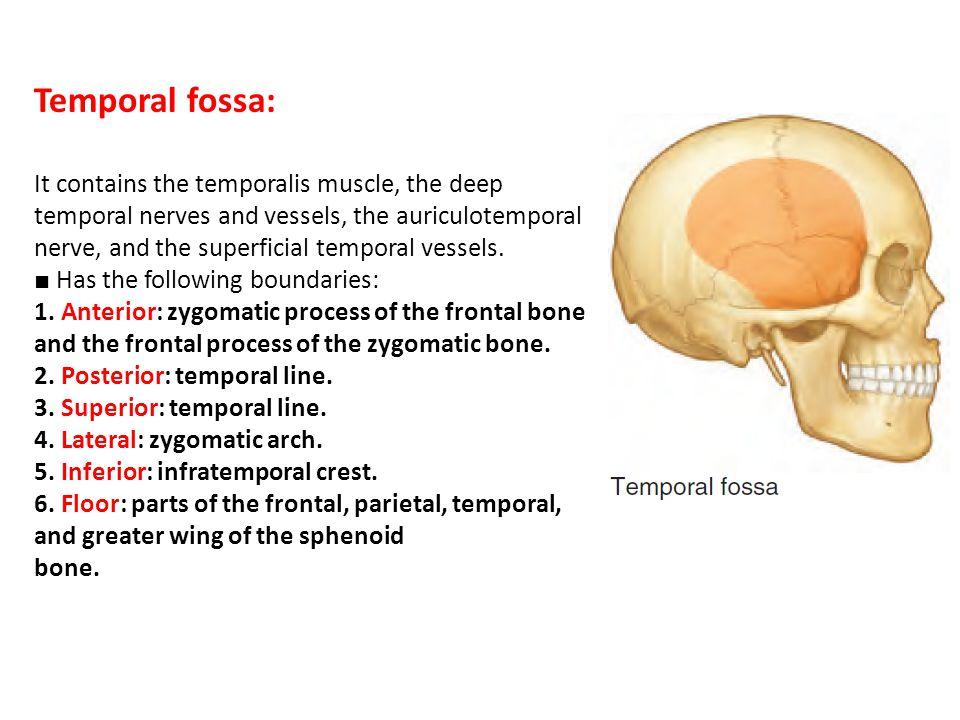 Temporal fossa, parotid region - ppt video online download Infratemporal Fossa Boundaries