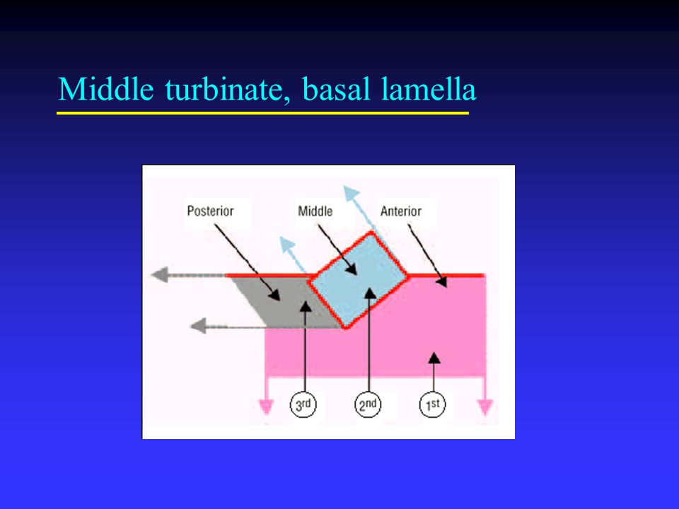 Anatomy The Lateral Wall Of Nose Maxillary Bone Ethmoid Bone Ppt