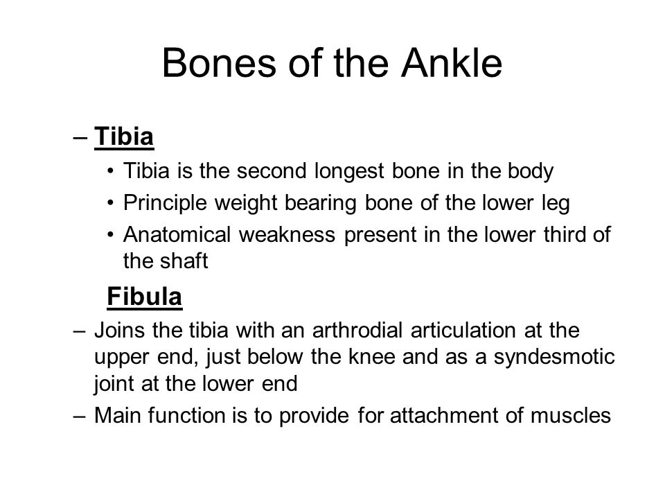 Ankle And Lower Leg Chapter Ppt Video Online Download