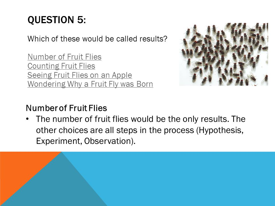 QUESTION 5: Number of Fruit Flies
