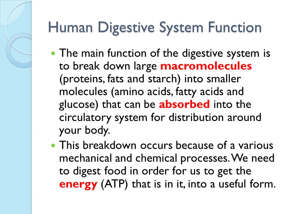 Digestion And Nutrition Ppt Download