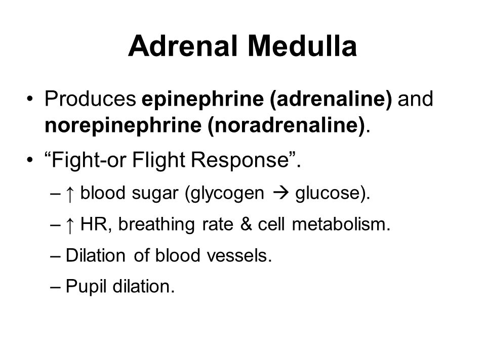 Adrenal Medulla Produces epinephrine (adrenaline) and norepinephrine (noradrenaline). Fight-or Flight Response .