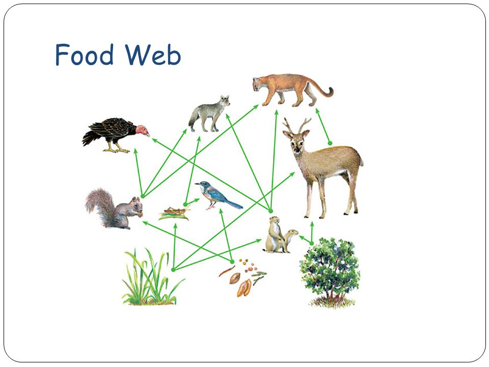 When To Use A Food Web Not A Food Chain