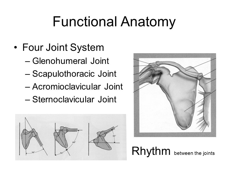 The Shoulder Complex Its mobility compromises stability. - ppt video ...