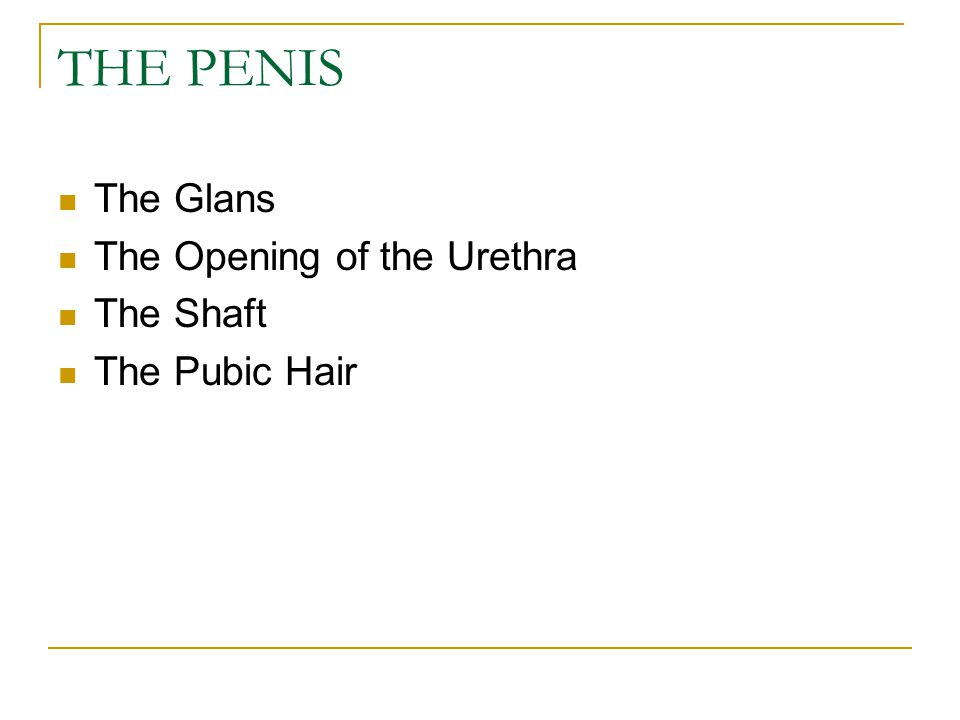 THE PENIS The Glans The Opening of the Urethra The Shaft