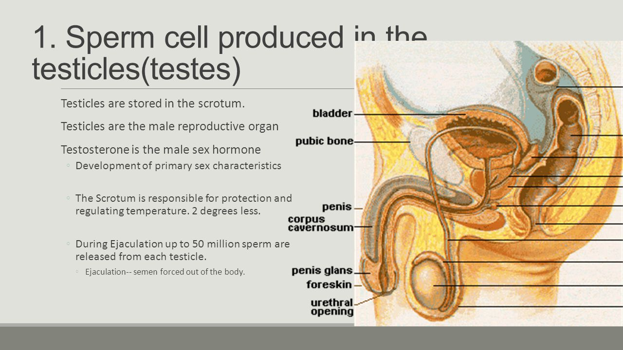 Why is it important to learn about male and female anatomy? - ppt ...