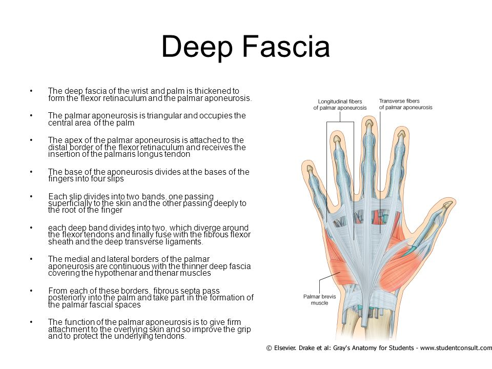 The Hand Ppt Download