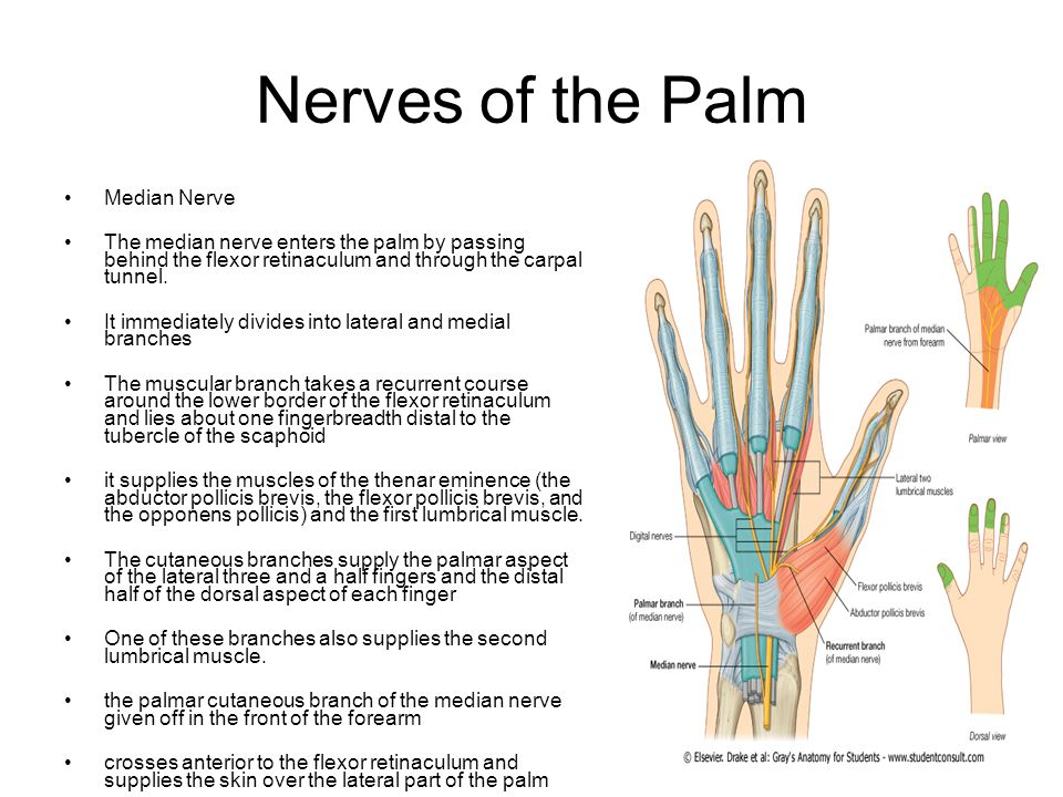 The Hand. - ppt download