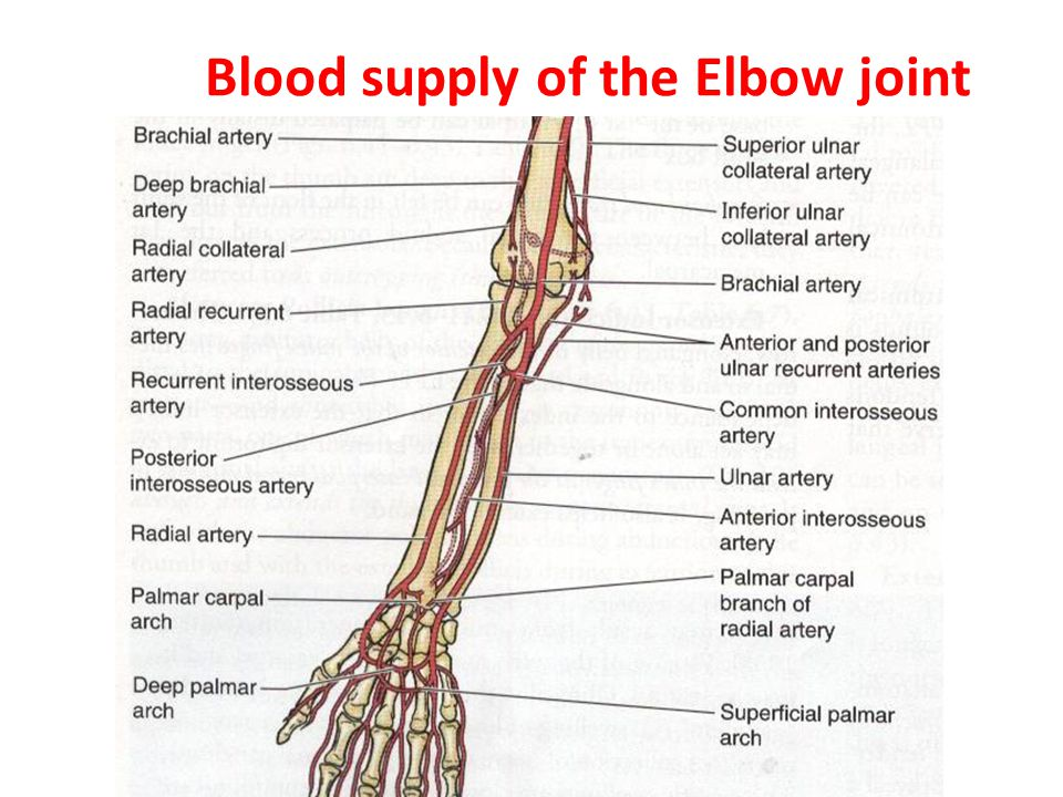 Elbow Joint Dr Rania Gabr Ppt Video Online Download