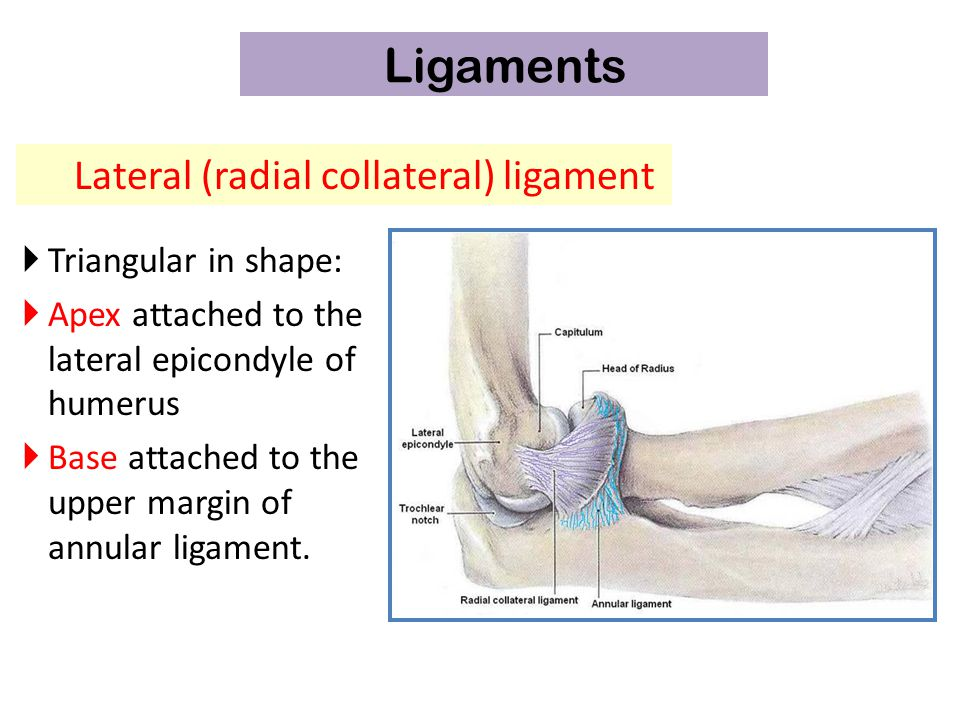 Elbow Joint Dr Rania Gabr. - ppt video online download