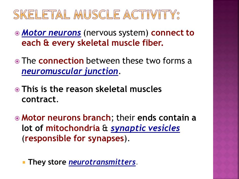 Skeletal muscle activity:
