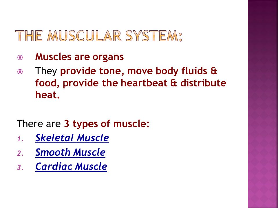 The Muscular system: Muscles are organs