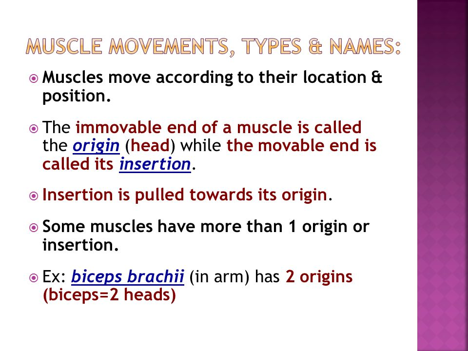 Muscle movements, types & names: