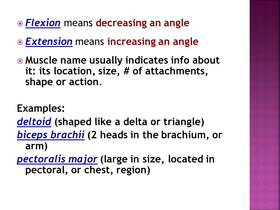Flexion means decreasing an angle