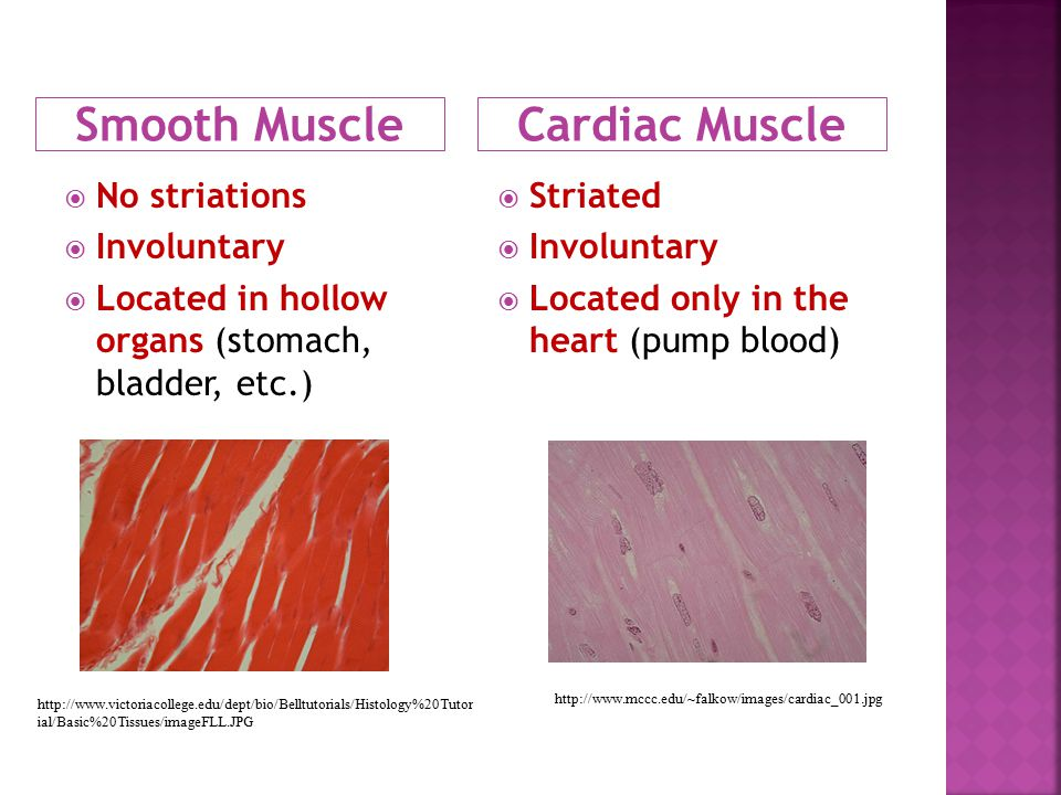 Smooth Muscle Cardiac Muscle