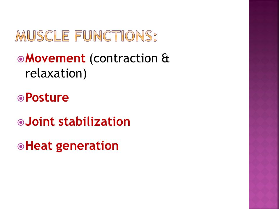 Muscle functions: Movement (contraction & relaxation) Posture