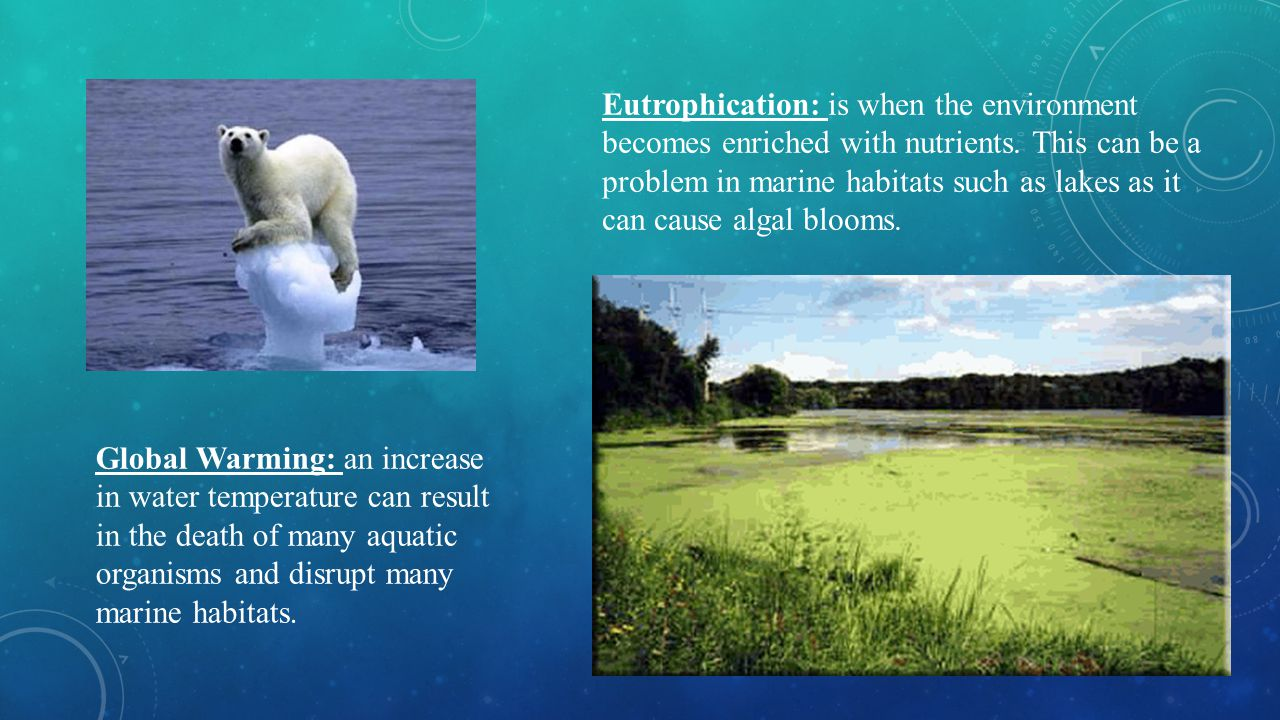 Eutrophication: is when the environment becomes enriched with nutrients. This can be a problem in marine habitats such as lakes as it can cause algal blooms.