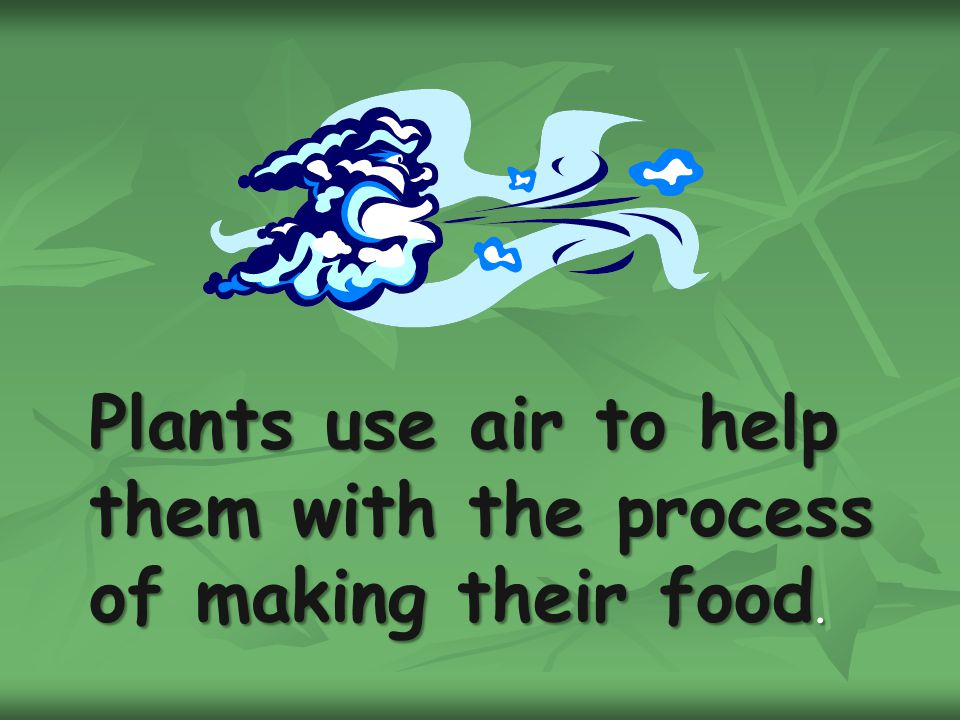 Plants use air to help them with the process of making their food.