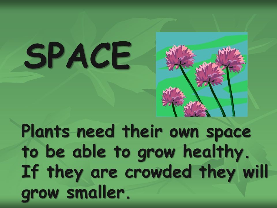 SPACE Plants need their own space to be able to grow healthy.