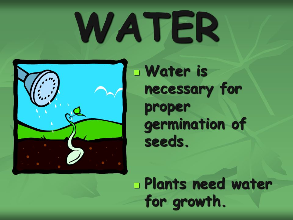 WATER Water is necessary for proper germination of seeds.