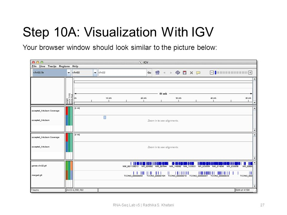 Step 10A: Visualization With IGV