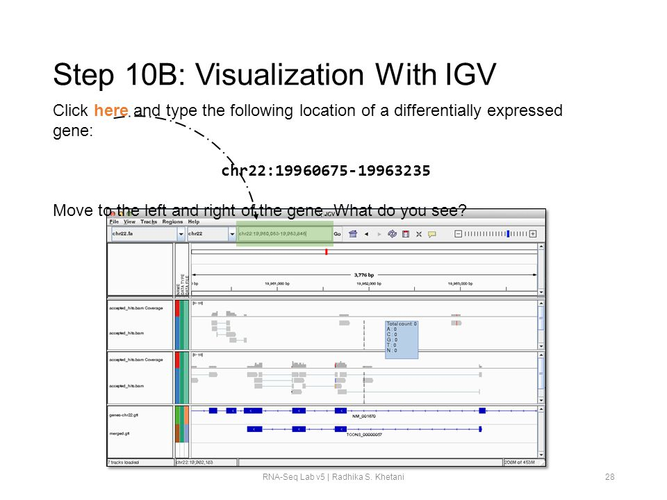 Step 10B: Visualization With IGV